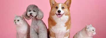 بیمه حیوانات خانگی